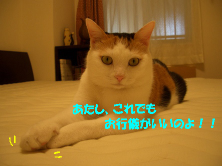 img20071019_5.jpg