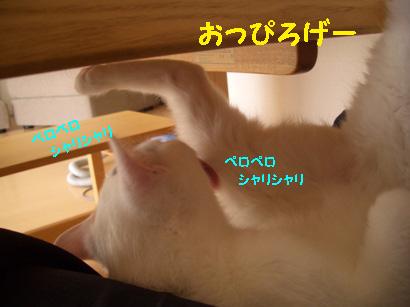 img20080130_2.jpg