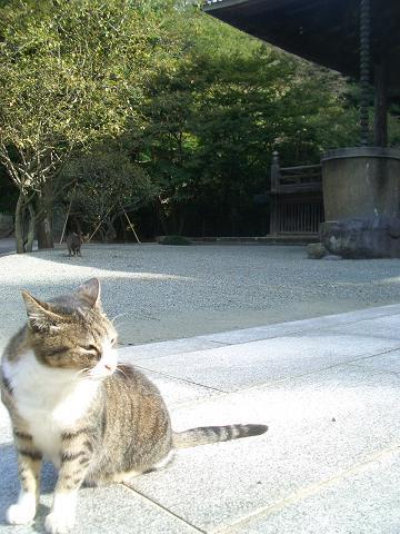 morningcat.jpg