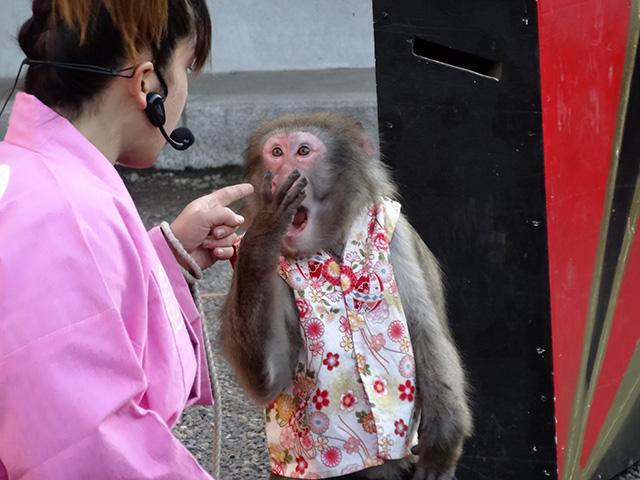 Monkey Showman