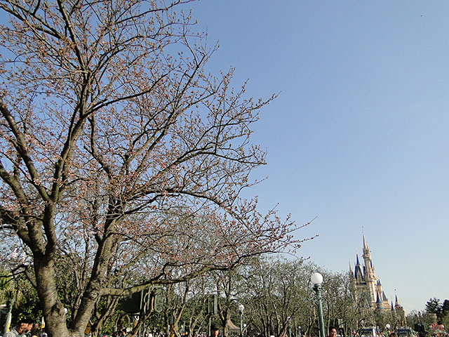 Cherry Tree in Tokyo Disneyland