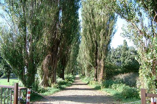 Poplar Avenue