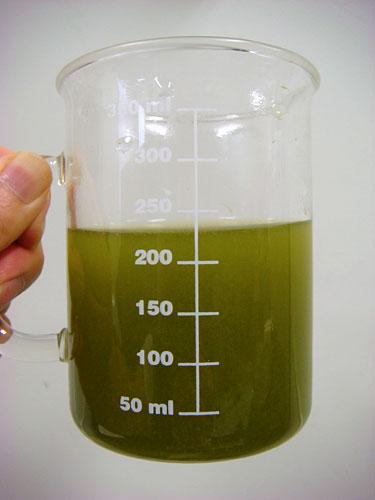 Real Green Tea