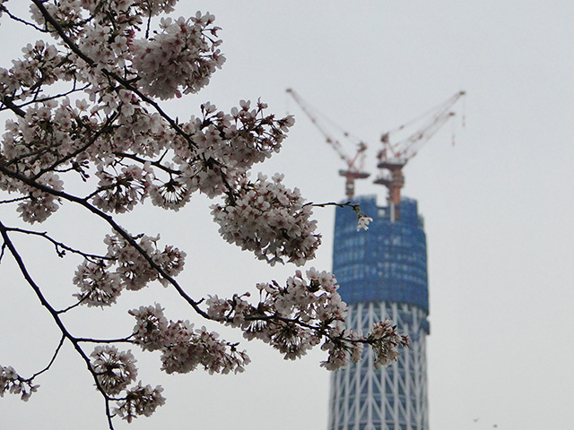 TOKYO SKY TREE with Cherry Blossoms