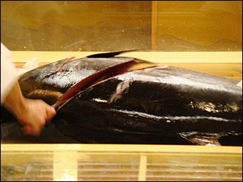 Tuna Cooking Show