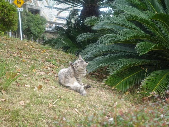 園内の猫 4_edit