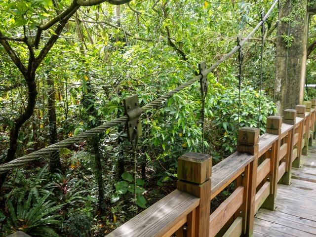 アジア熱帯雨林区 9_edit