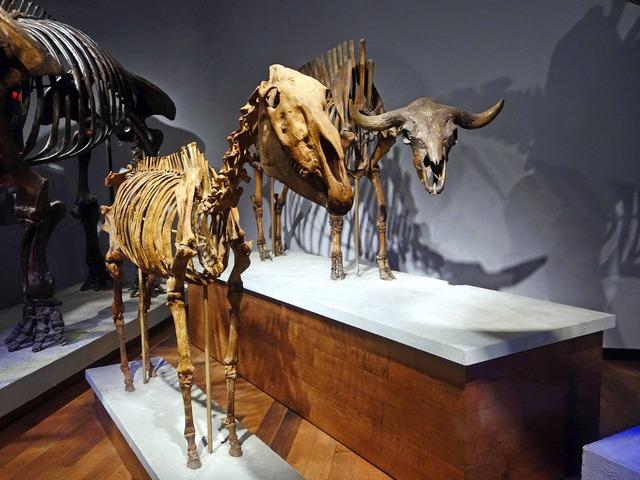 馬とバイソンの骨格標本_edit