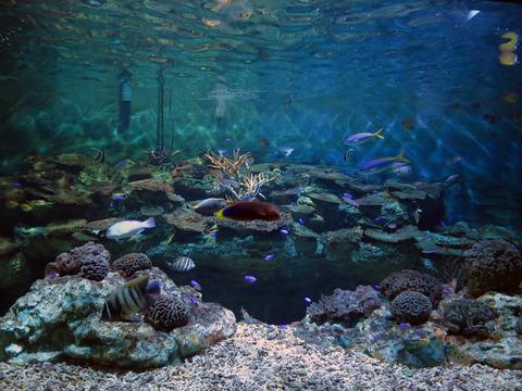 サンゴ礁の魚 2_edit