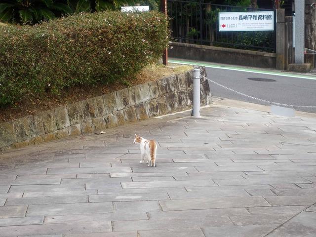 園内の猫 1_edit