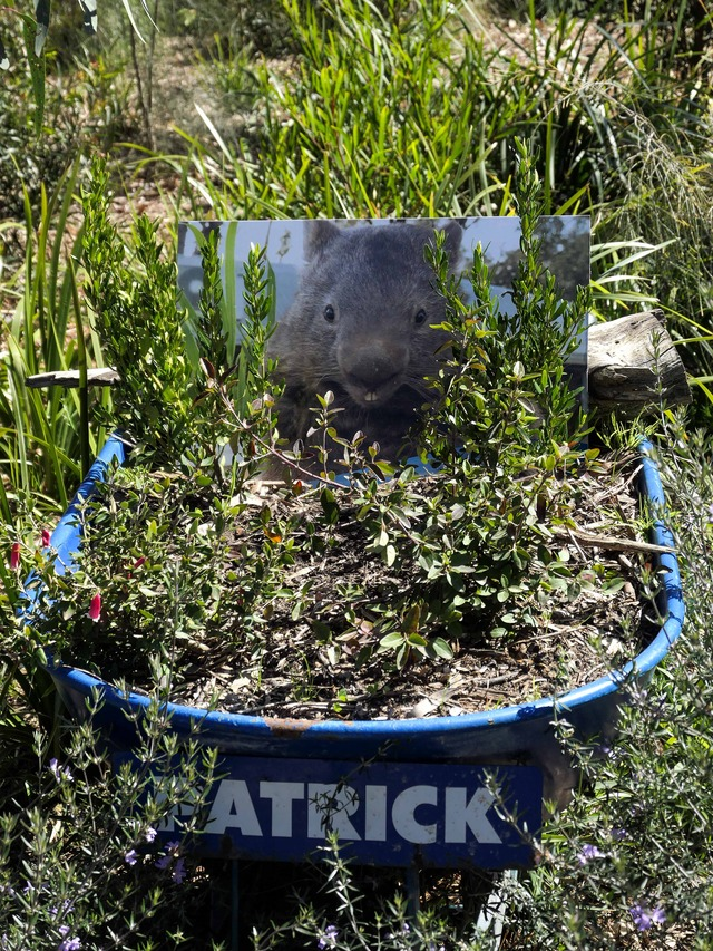 Patrick the Wombat 3_edit