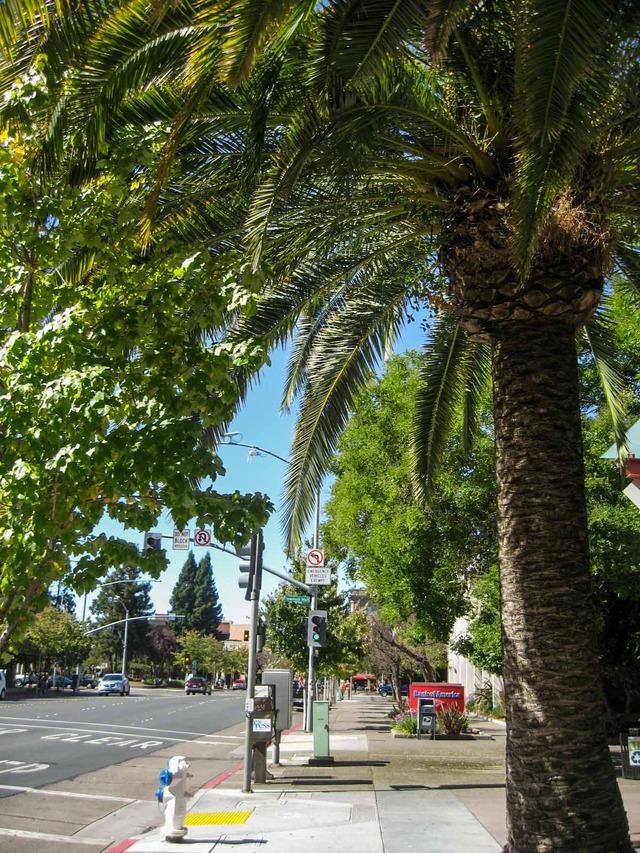Santa Rosa Ave 3_edit