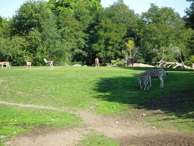 Gazelle & Zebra_edit