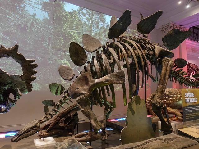 ステゴサウルスの骨格標本 1_edit