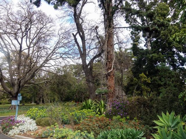 王立植物園 13_edit