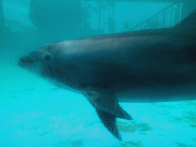 イルカのプール 3_edit