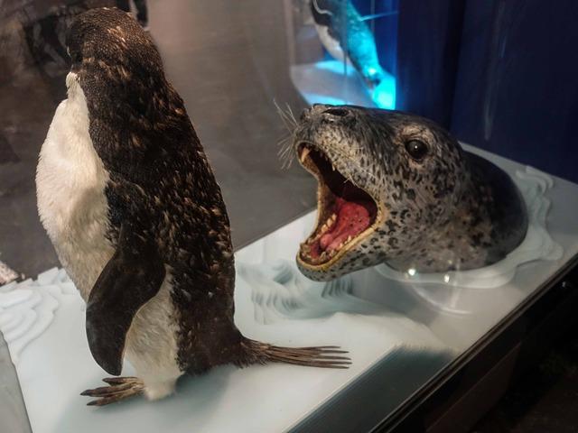 ペンギン 8_edit