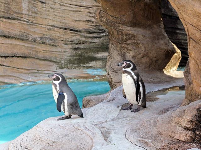 オウサマペンギン 4_edit