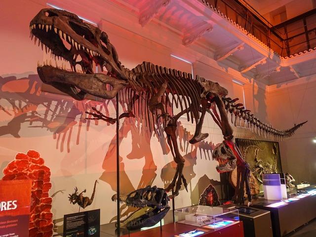ティラノサウルス 1_edit