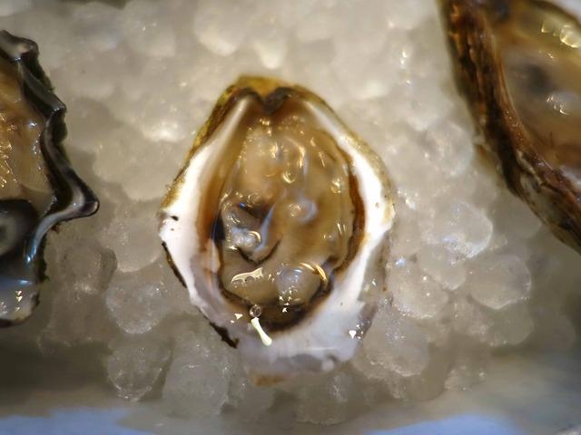 Fresh Oysters 6_edit
