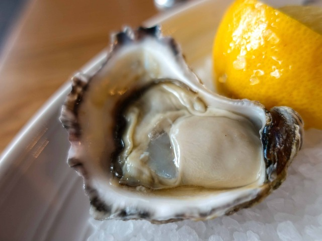 Sydney Rock Oysters 6_edit