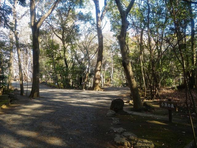 小浜の森 3_edit