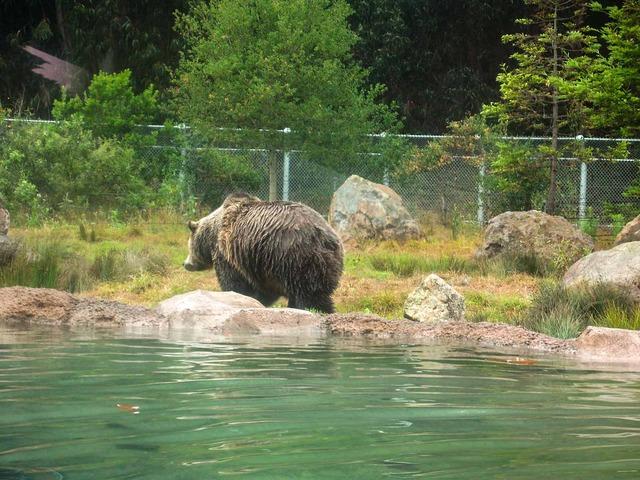 Grizzly Bear 2_edit
