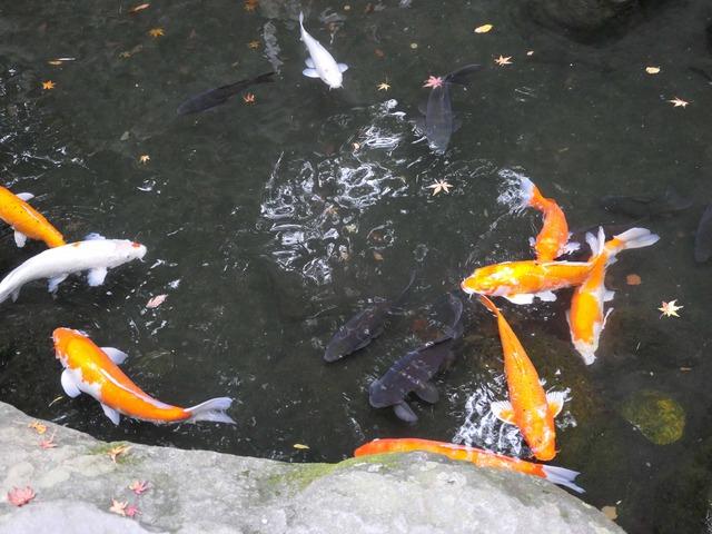 弁天岩の前の池 2_edit