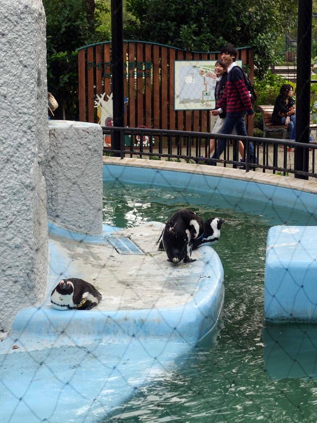 ペンギン 3_edit