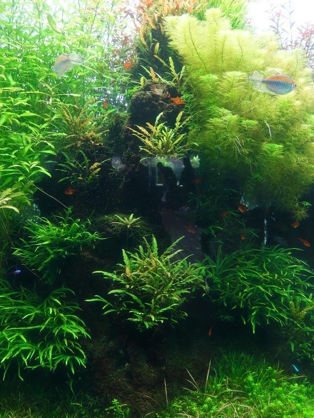 水のきらめき~自然水景~ 3_edit