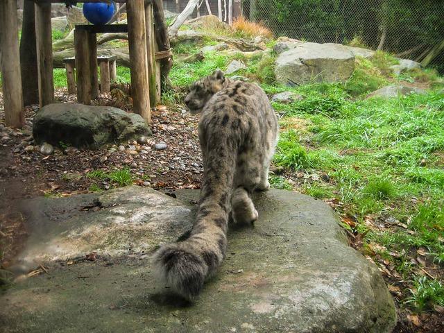 Snow Leopard 3_edit