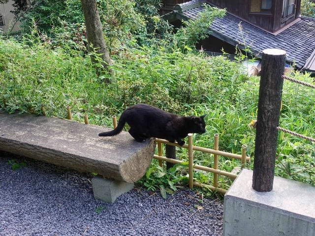 猫 11_edit