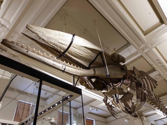 クジラの骨格標本 4_edit