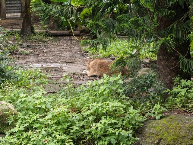 ハイイロオオカミ 3_edit