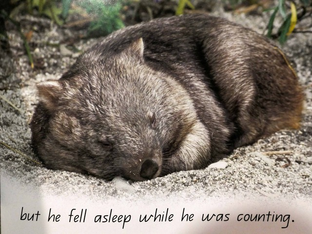 Wombat's Friend 13_edit