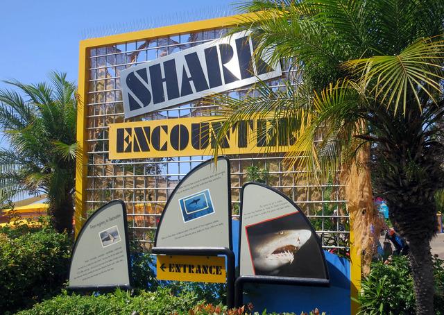 Shark Encounter 2_edit