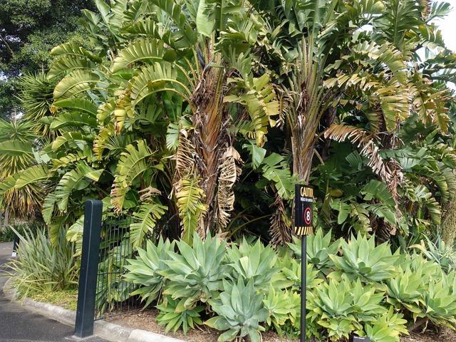 王立植物園 6_edit