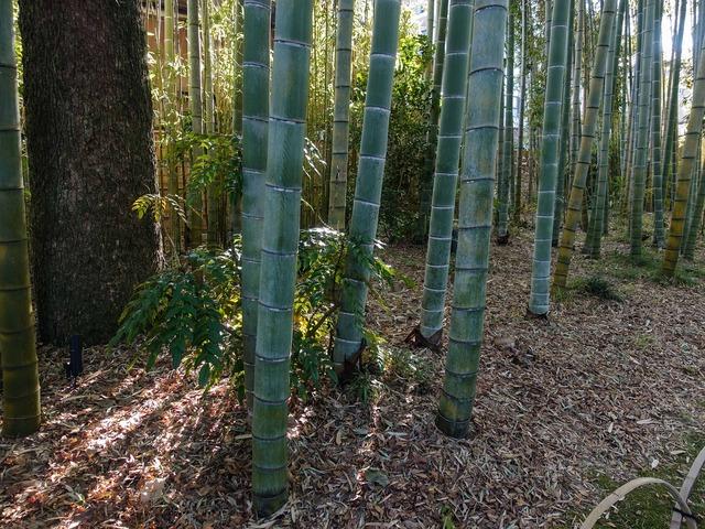 竹林の小径 6_edit