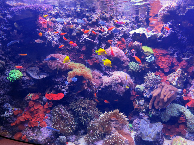 Pacific Reef Community_edit