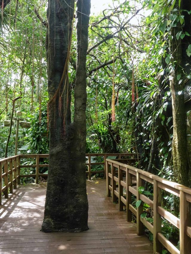 アジア熱帯雨林区 5_edit