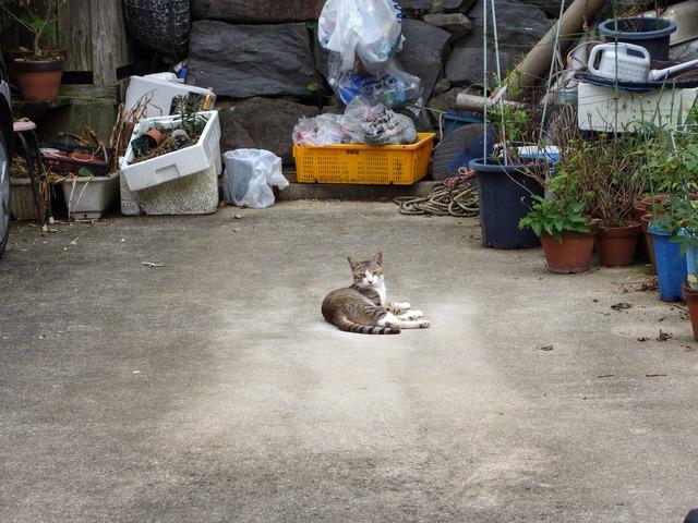 呼子の猫 1_edit