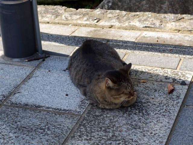 お城周辺の猫 3_edit