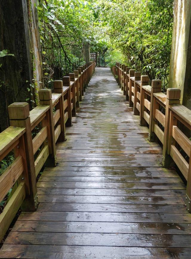 アジア熱帯雨林区 8_edit