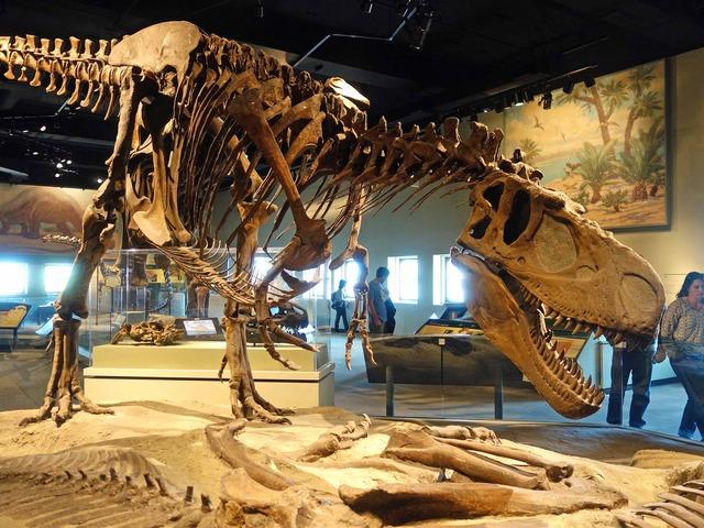 ダスプレトサウルス 4_edit