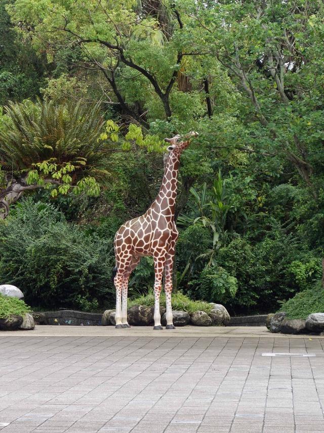 台北市立動物園 7_edit
