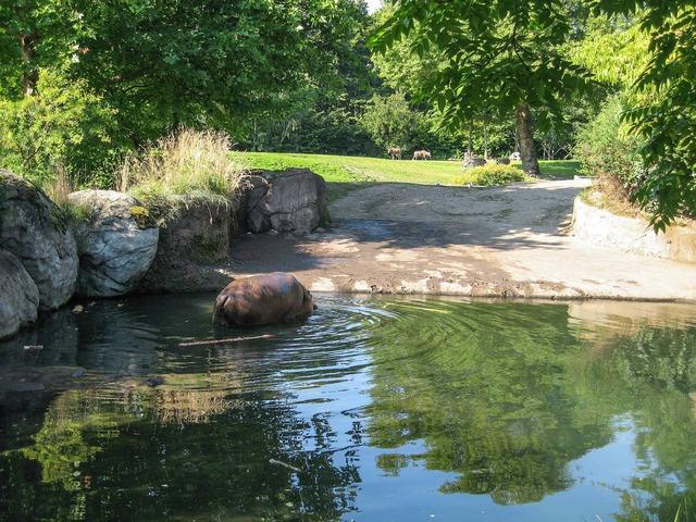 Hippopotamus 2_edit