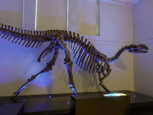 ムッタブラサウルスの骨格標本 2_edit