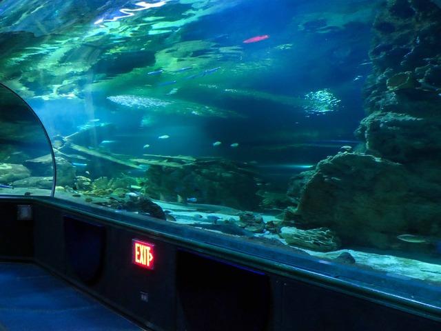 水中トンネル 7_edit