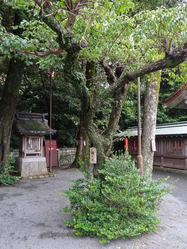 梅の木_edit