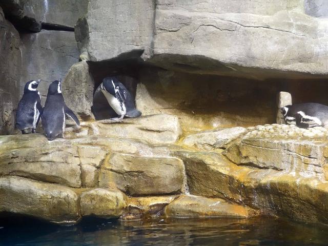 ペンギン 12_edit